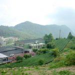 台湾烏龍茶|阿里山茶の産地| 阿里山の茶園とアクセス方法について